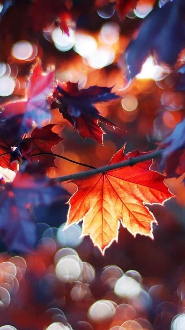 What do you do when life gives you Autumn