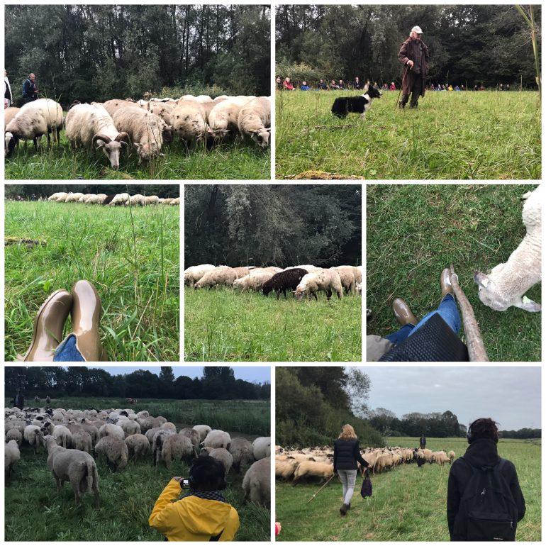 Natuurtheatervoorstelling Kudde in de Biesbosch